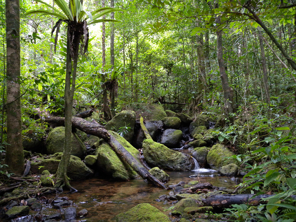 Larges Forest In Africa 48